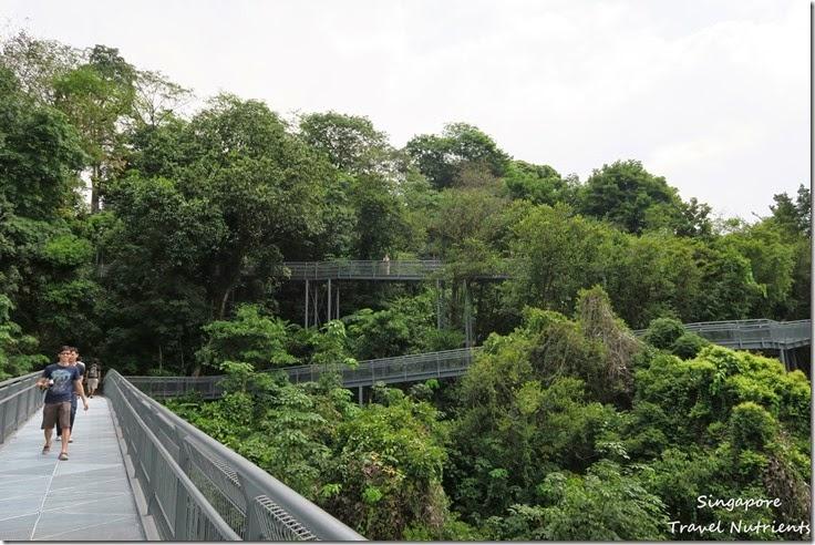 新加坡花柏山 (70)