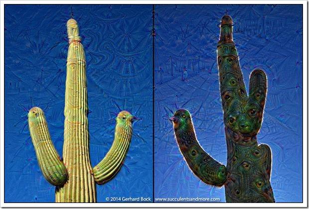 weird2015-07-19_20-00-54.057388071218_saguaro_diptych