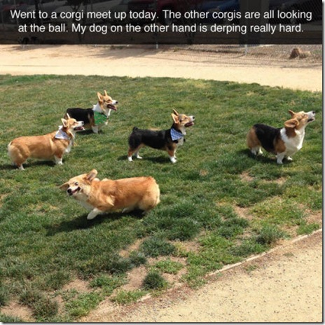 awesome-dogs-014