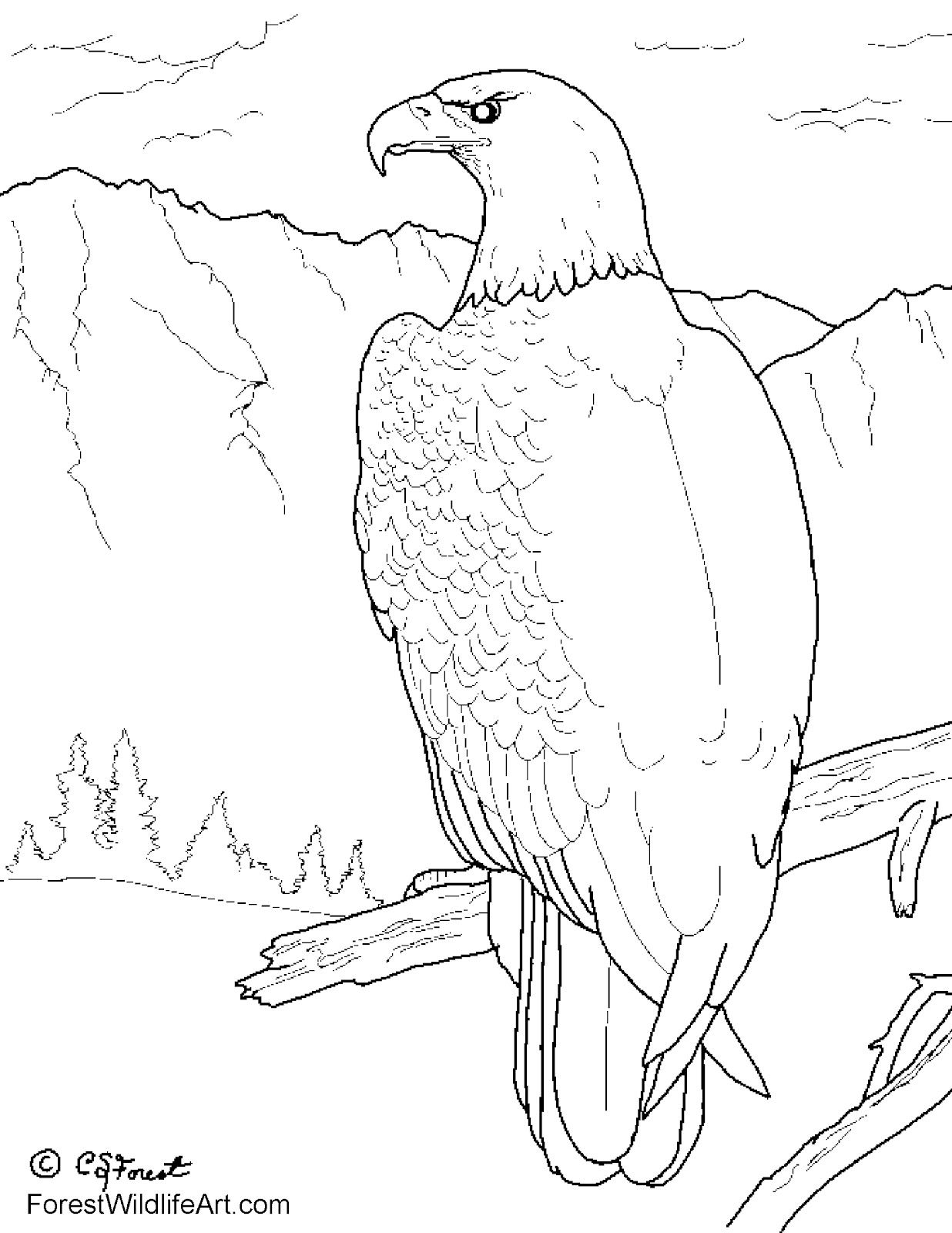 Creatures, Wild Animals Free Colouring Pages from  - free wild animal coloring pages