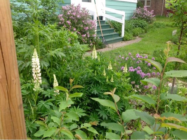 Lillie House : Permaculture Jardin de Cure´
