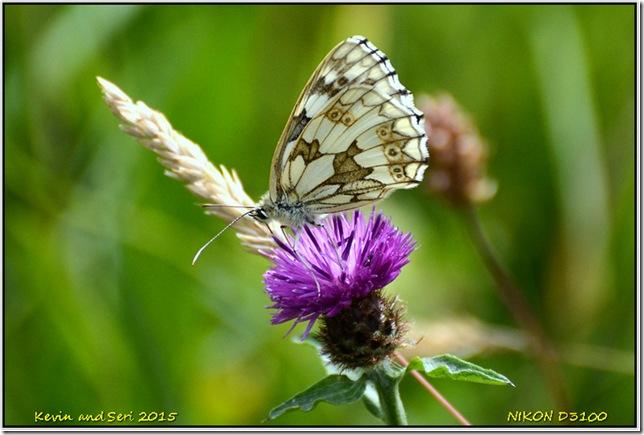 Draycote Meadows - July
