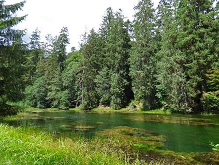Pond, Hoh Rain Forest