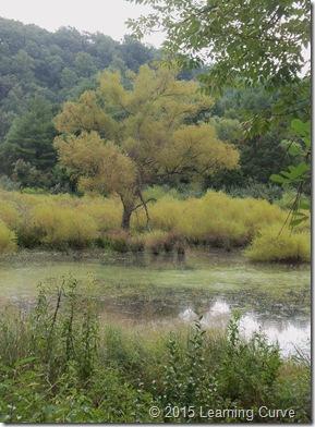 Augusta Wetlands 018