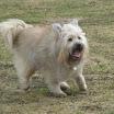 Buddy 2012-03-03 3.JPG