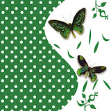 borboletas (35).jpg
