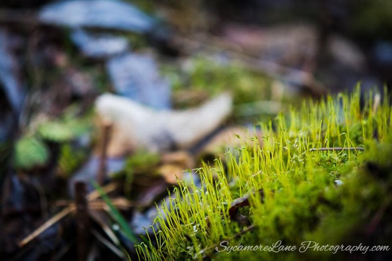 SycamoreLane Photography-2015- 365-  95