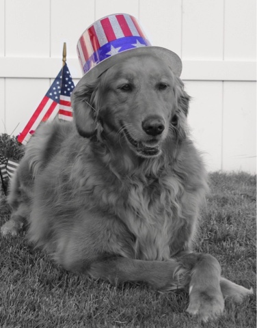 patriotic dog black and white sunday
