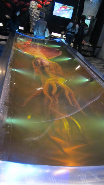 The colossal squid on display at Te Papa caught in Antarctica's Ross Sea in 2007.