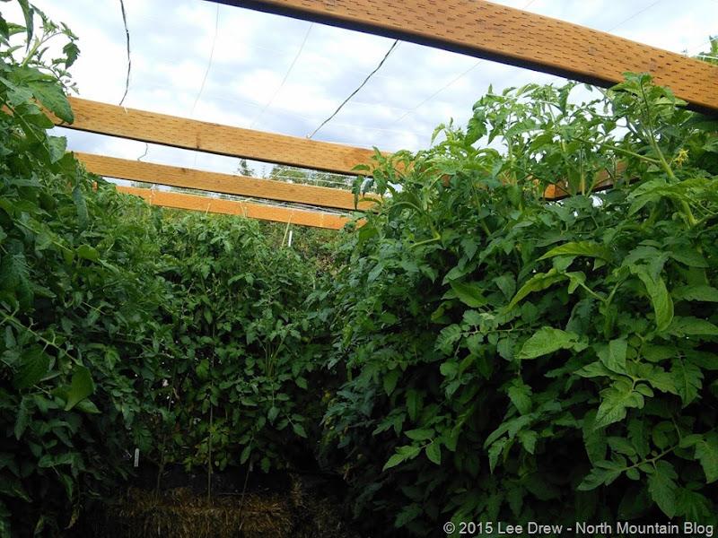 Straw Bale Garden - 21 July 2015