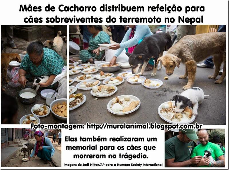 maes_cachorro_nepal