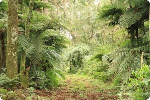 Parque provincial Cañadón de Profundidad5