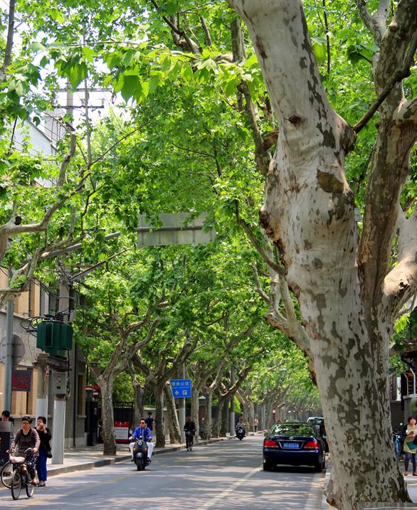 franska kvarter i shanghai