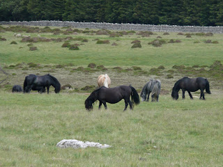 Horses on Heughscar Hill