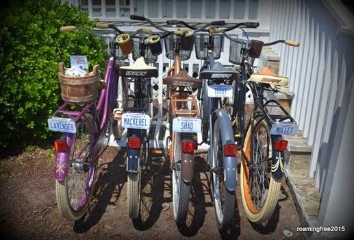 Cute rental bikes