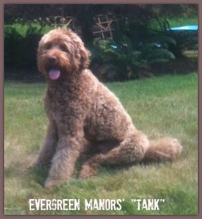 Evergreen Manors Tank