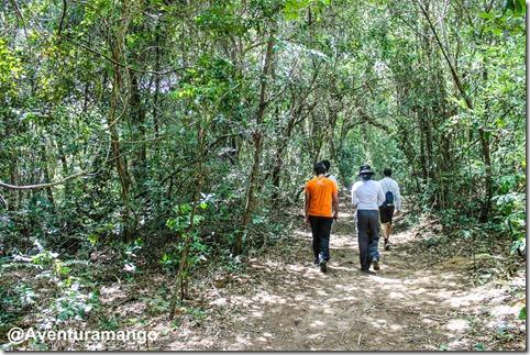 Caminhada na Mata Estrela - Baía Formosa - RN