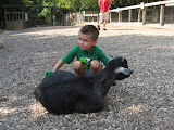 Bryan brushing a goat at the Nashville Zoo 09032011a