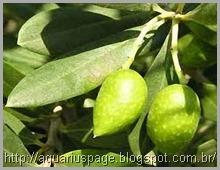 Extrato-folha-oliveira-antibióticos
