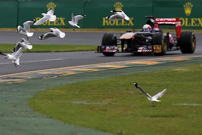 болид Toro Rosso и чайки на трассе Альберт-Парк на Гран-при Австралии 2013