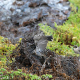 Briga por território - Rabida, Galápagos