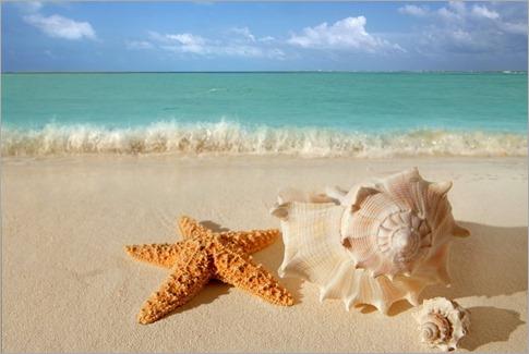 estrella-de-mar-y-conchas-1190