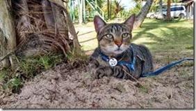 gato Fredy