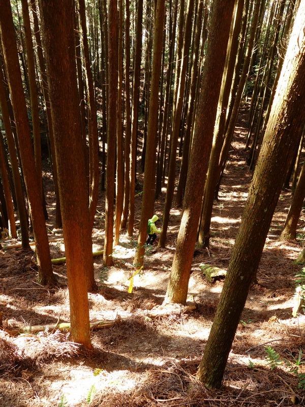 2014_0118 鳶嘴山西北稜→大崠山來回_063
