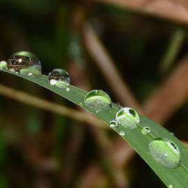 wildlife water droplets  by Zhenya Philip - Nature Up Close Natural Waterdrops ( macro, green, droplets, grass, earth, water droplets )