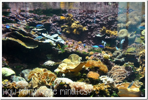 The Townsville Aquarium | How Many More Minutes?