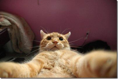 selfie 4 (11)