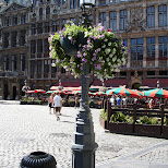 grand place in brussels in Brussels, Brussels, Belgium