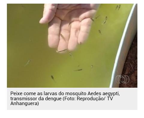 Senador  Sá: Prefeitura agora tem um novo aliado no combate ao mosquito da Dengue (Aedes Aegypti), saiba quem é e adquira também esse exterminador e proteja já sua casa!