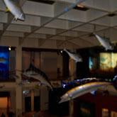 Houston Museum of Natural Science - 116_2783.JPG