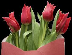 tulip clipart (3)