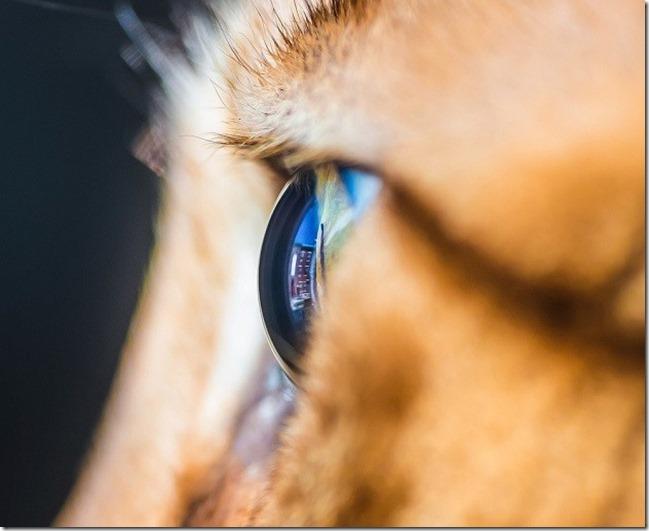 Cats Eyes12