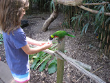 Someone feeding a lorikeet at the Nashville Zoo 09032011a