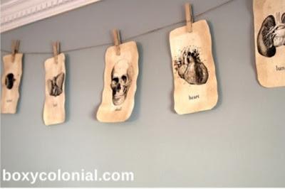 anatomy banner