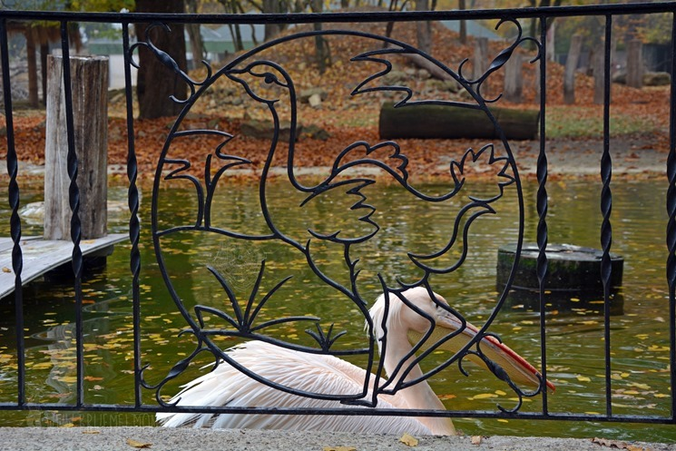 Zoo Heidelberg (10)