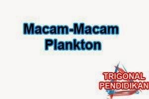 Macam-Macam Plankton