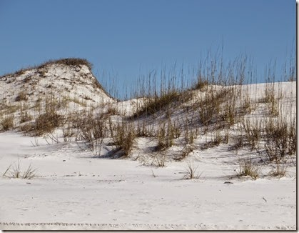 Grayton_beach_dunes