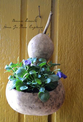 gourd flowers