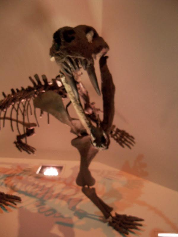 Houston Museum of Natural Science - 116_2701.JPG