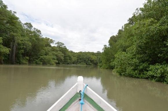 Rio Mojuim - Sao Caetano de Odivelas, Parà