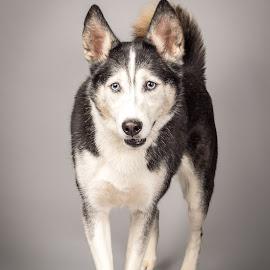 by Myra Brizendine Wilson - Animals - Dogs Portraits ( canine, bella, dogs, pet, pets, dog )