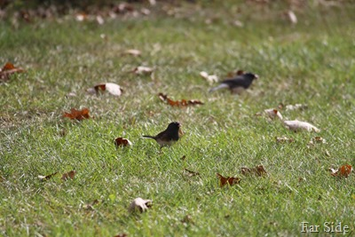 Juncos stopped by