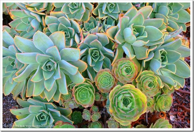 150926_SucculentExtravaganza_082