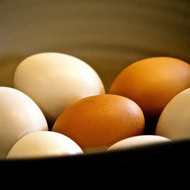 Eggs for Breakfast! by Judy Laliberte - Novices Only Objects & Still Life ( bowl, eggs, food, white, brown )