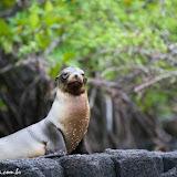 Floreana - Galápagos