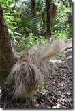 Palm fibers 2